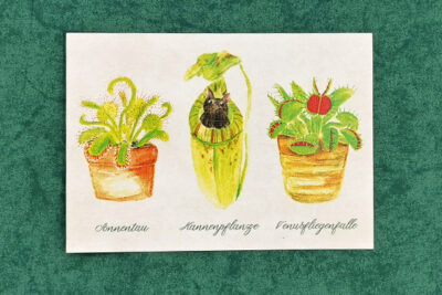 Carnivorous plants Sundew Pitcher plant with bat Venus flytrap illustrated by Max Improving