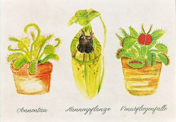 Details of carnivorous plants Sundew Pitcher plant with bat Venus flytrap illustrated by Max Improving